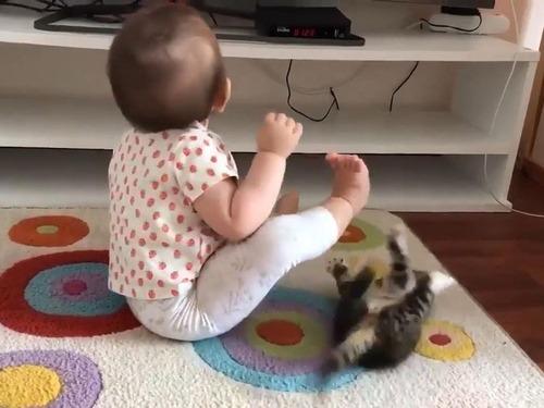 子猫が赤ちゃんに挑む03