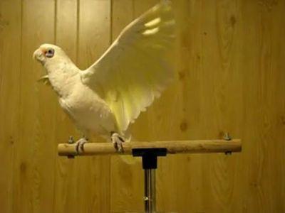 鳥のダンス