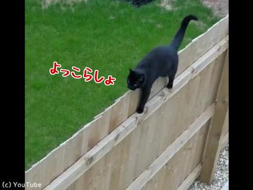 柵の上を歩く猫がちょっとおかしい00