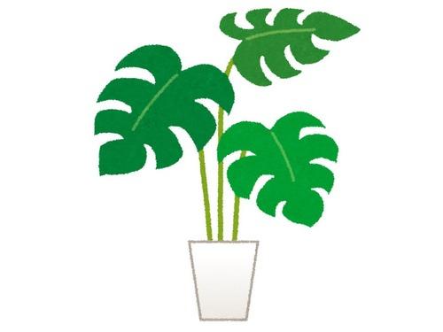 警備員がオフィスビルの植物を守る00