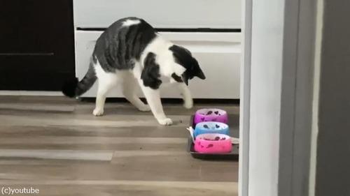 アライグマみたいにご飯を食べる猫01