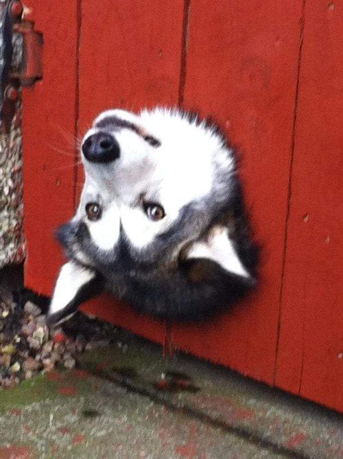 近所の犬が頻繁にこれをしている01