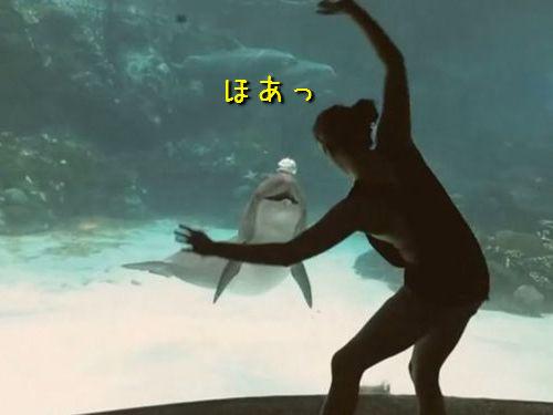 イルカを楽しませる女性00