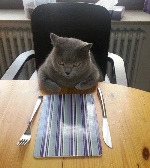 お腹をすかせた猫01