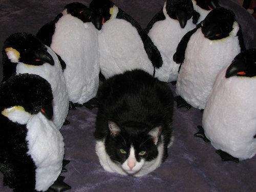 ペンギン猫00