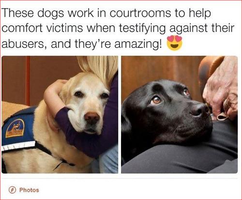 被害者サポート犬01