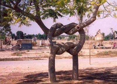 凄い木10
