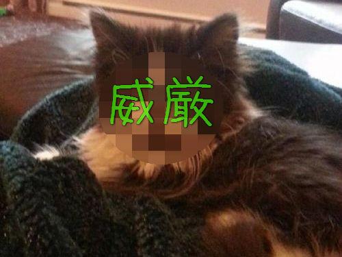 威厳ある猫00