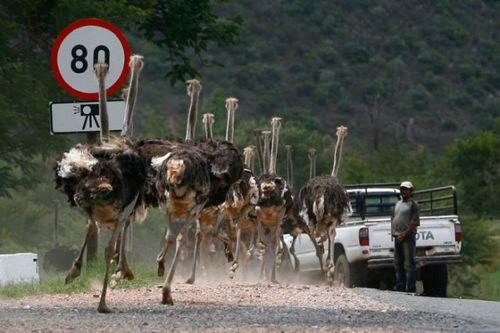 道路を渡る動物14