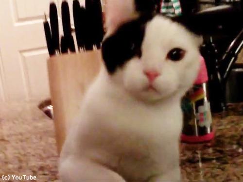 ドローンで猫撮ってみた00
