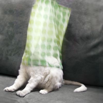 潜む猫15