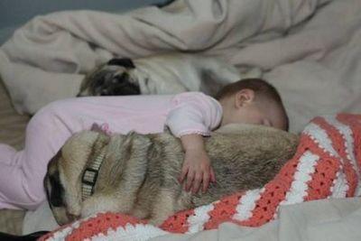 パグと赤ちゃん07