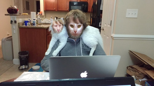 猫はパソコンに乗りたがる04