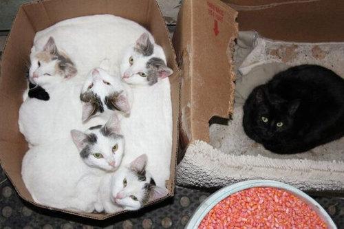 08箱や入れ物に収まった動物たち