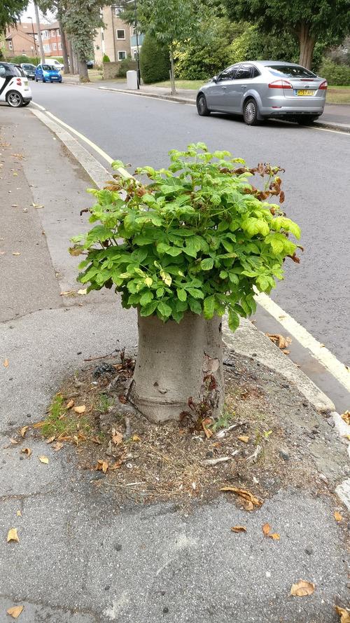03生命力を感じる植物や木