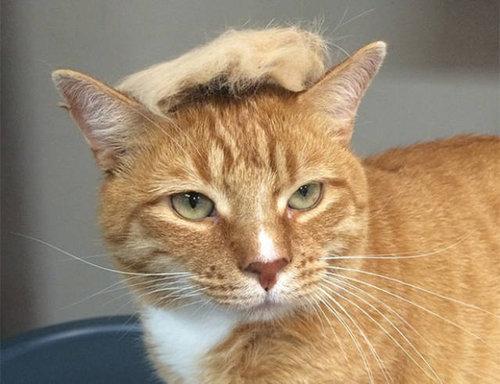 ブラッシングした猫の抜け毛をかつらに04