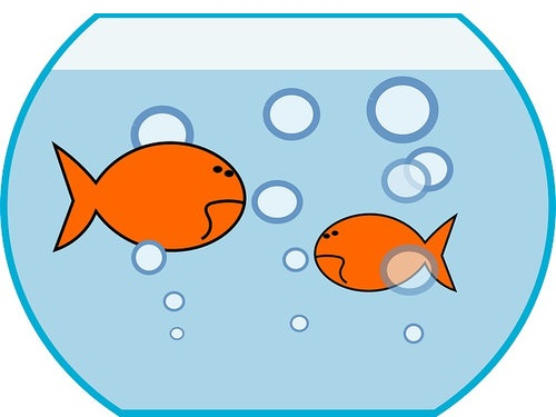 便秘の金魚00