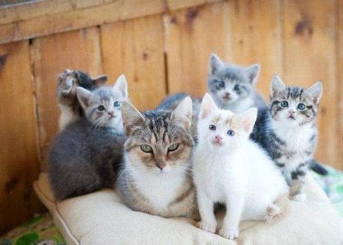 自慢の子猫たち25