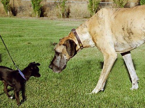 大きな犬のトラブル00