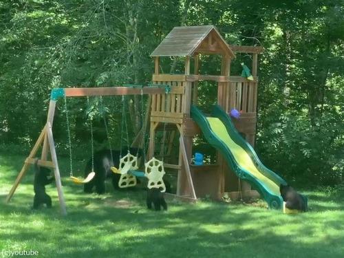 庭の遊具でクマの親子たちが楽しそうに遊んでた04