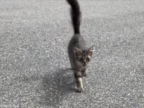 犬と散歩中に子猫が近づいてきた01