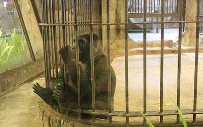 タイの動物園01