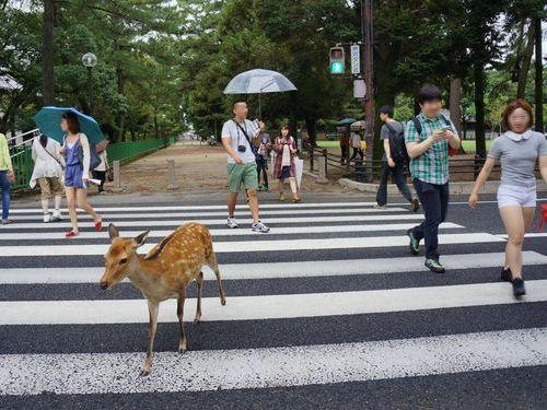 奈良の鹿と外国人05