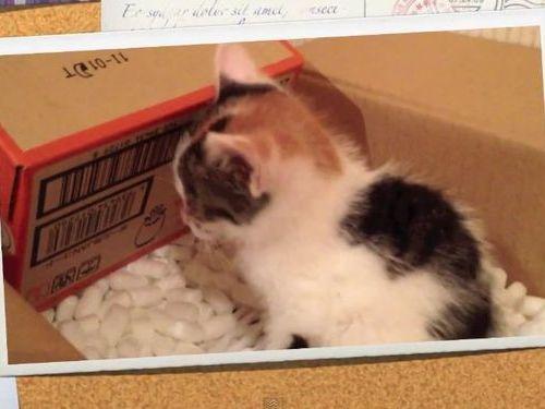 子猫を保護した一ヶ月間の記録