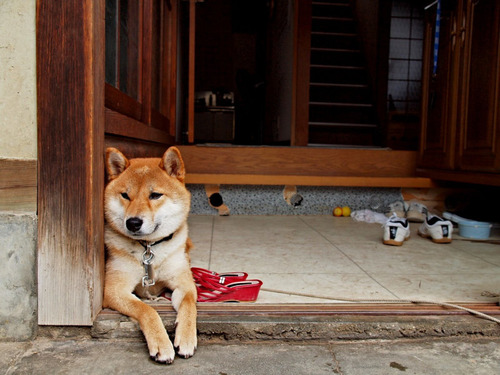 最も攻撃的な犬07