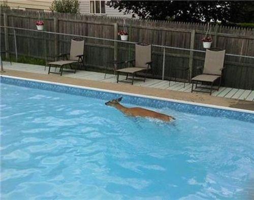 プールに動物02