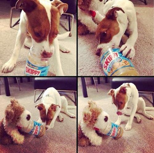 犬を飼うべき理由20