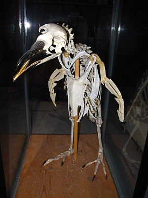 ペンギンのヒザ01