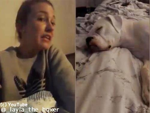 犬が寝ている間にスナック菓子を食べようとしたら…00