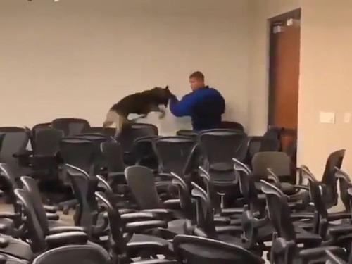 犯人を追うときの犬2匹の比較