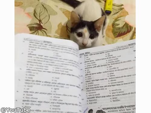 助けて、猫のせいでテスト勉強ができないの00