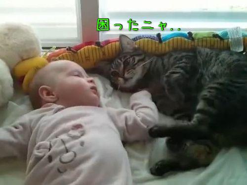 猫「赤ちゃんの寝相が悪いな」00