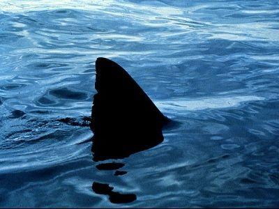 船にサメ00