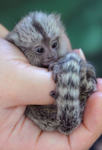 動物の赤ちゃん24