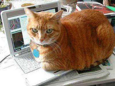 パソコンの上の猫05