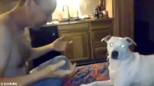 犬、お父さんの手品に驚く04