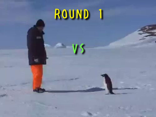 ペンギンvs人間