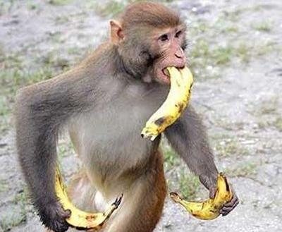 日本企業をサルとバナナで説明すると…