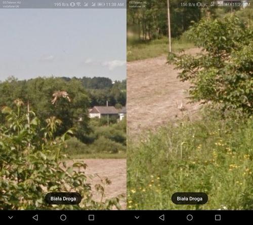 Googleストリートマップに写っていたウサギ03