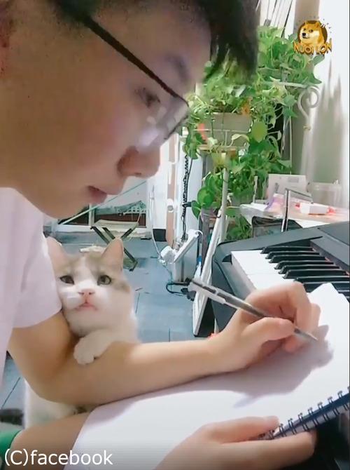 この猫は絶対自分の可愛さを知ってる03