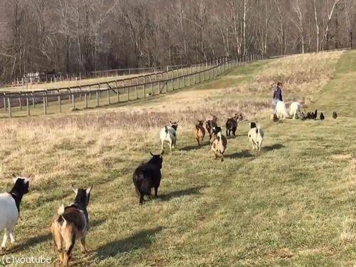 農場で動物と散歩06