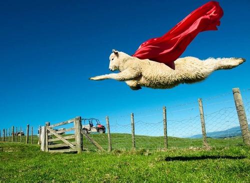 羊ジャンプ08
