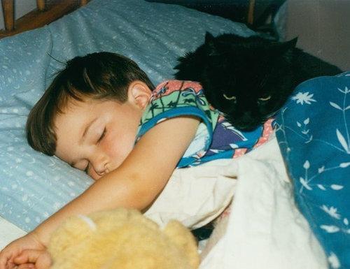 猫をぎゅーっとしたくなる写真18
