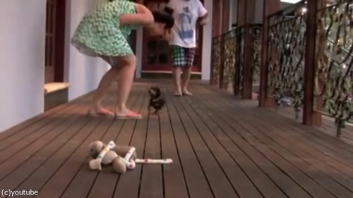レディを守る小さな子犬06