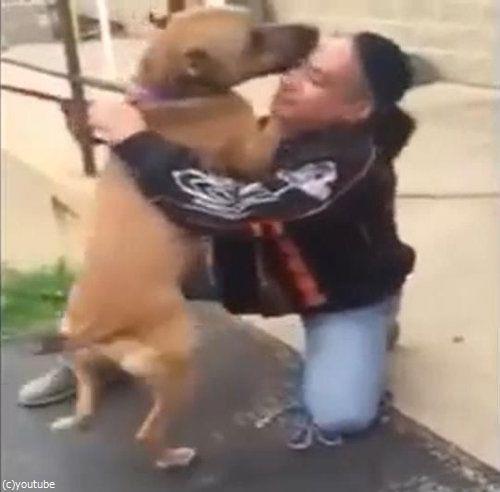 盗まれた犬と2年後に再会05