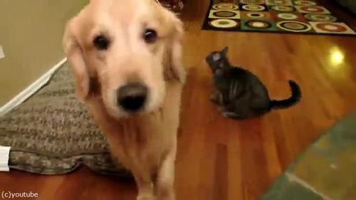 犬にハグする猫04